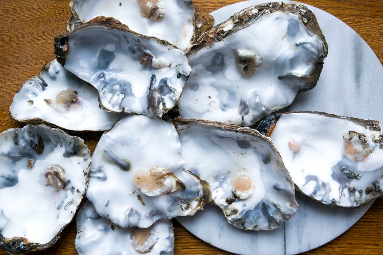 Oysters 10