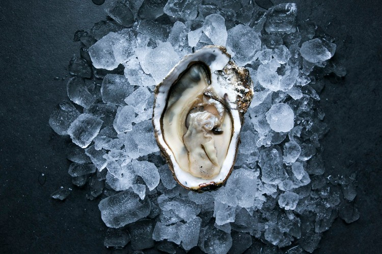 Oysters 7